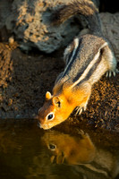 Squirrel_GMG_45T5279