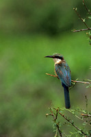 Bee-eater_S_SCN002