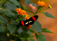 Butterfly_RP_MG_1786