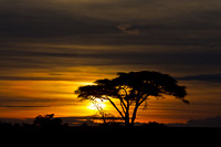 """Serengeti National Park"", Sunrise, Tanzania"