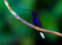 Sabrewing_V_MG_1444