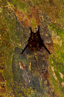 Bat_GSW_MG_2634