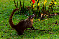 Coati_WN_MG_2885