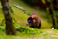 Coati_WN_MG_2820